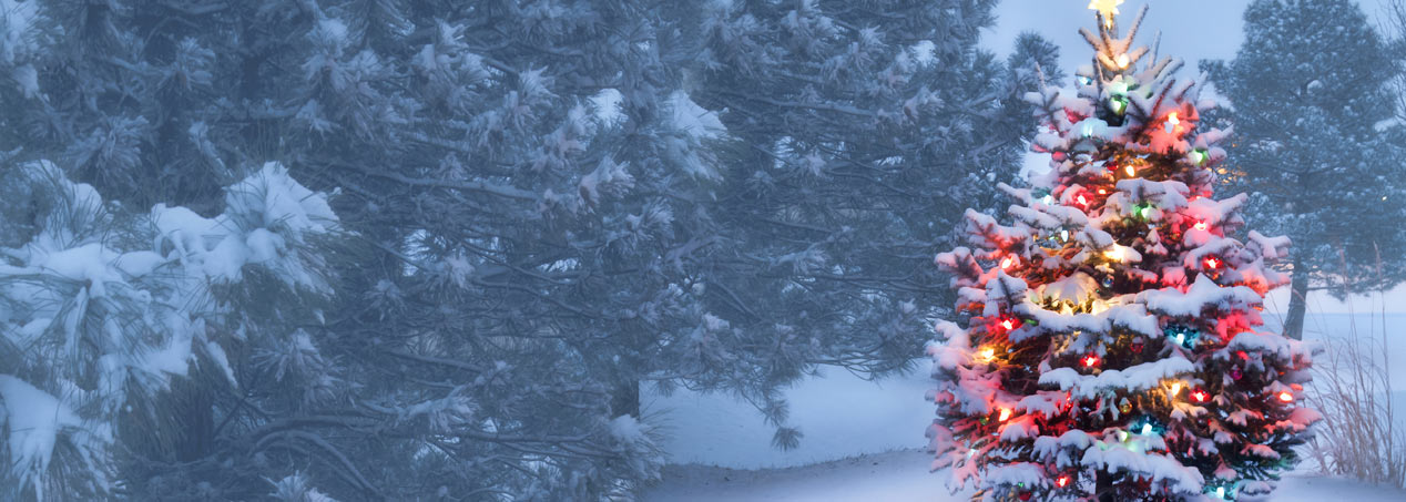 Cut Your Own Christmas Tree Long Island.Pine Meadows Tree Farms The Best Christmas Trees In Bc