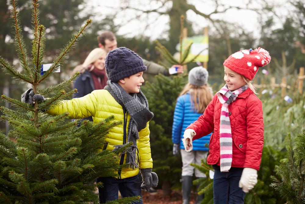 Help us share the joy and get a free Mini Christmas Tree!