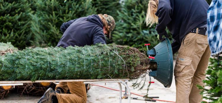 Install tips for fresh tree converts!